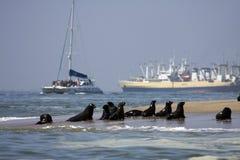 Viaggio della barca intorno alla baia di Walvis Immagine Stock
