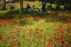 Viaggio della bicicletta della sorgente Fotografie Stock