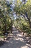 Viaggio della bicicletta in un legno sull'isola di Porquerolles fotografie stock