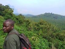 Viaggio della gorilla Immagine Stock