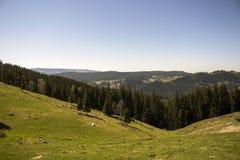 Viaggio della montagna in Vatra Dornei, Romania Immagini Stock Libere da Diritti
