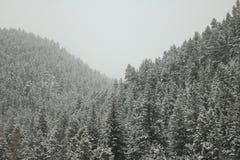 Viaggio della neve alle montagne Immagini Stock Libere da Diritti