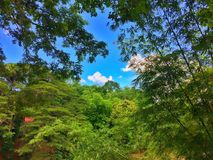 Viaggio di Bohol immagini stock
