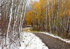 Viaggio di inverno nel legno Fotografie Stock Libere da Diritti