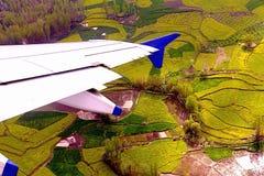 Viaggio di viaggio nel Kashmir India, campo della senape Fotografia Stock