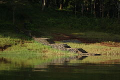 Viaggio & fauna selvatica Immagine Stock