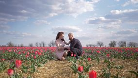 Viaggio felice al campo di fioritura, madre futura della donna incinta con la pancia che gode della festa con il marito sul prato video d archivio