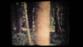 Viaggio molto dengerous mistico della foresta stock footage