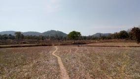 Viaggio stradale della montagna della foresta di agricoltura Immagini Stock