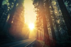 Viaggio stradale della sequoia di California fotografia stock libera da diritti