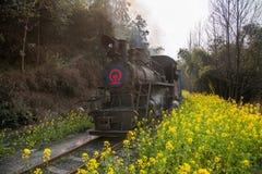 Viajando entre la ciudad de Leshan, las abejas del tren de Yan Yang de ka de Sichuan Qianwei al pequeño canola de la estación de  Fotografía de archivo