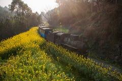 Viajando entre la ciudad de Leshan, las abejas del tren de Yan Yang de ka de Sichuan Qianwei al pequeño canola de la estación de  Fotografía de archivo libre de regalías