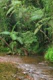 Viajando o parque nacional de Daintree imagens de stock royalty free