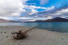Viajante no lago Pangong em Leh Ladakh, Jammu e Caxemira, Índia imagem de stock royalty free