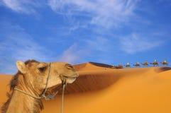 Viaje al desierto Fotos de archivo libres de regalías