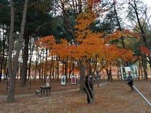 Viaje a Corea fotos de archivo