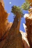 Viaje de Bryce National Park Fotos de archivo libres de regalías