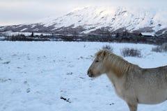 Viaje de Islandia Imagen de archivo