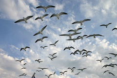 Viaje de la gaviota imagen de archivo