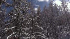 Viaje de las vacaciones de invierno en bosque nevoso en la telesilla metrajes