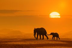 Viaje de los elefantes Fotografía de archivo