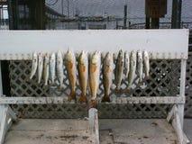 Viaje de pesca Fotografía de archivo libre de regalías