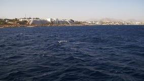 Viaje del barco en el barco de placer en el Mar Rojo con las vistas de la pen?nsula del Sina? de la costa, Egipto almacen de metraje de vídeo