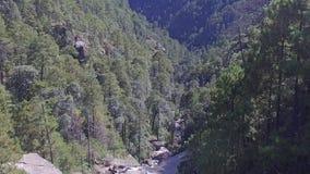 Viaje del bosque desde arriba almacen de video