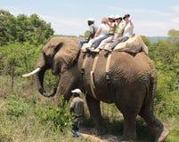 Viaje del elefante imágenes de archivo libres de regalías