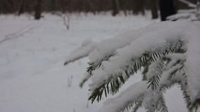 Viaje del esquí en el bosque del invierno almacen de video