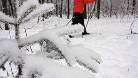 Viaje del esquí en el bosque del invierno almacen de metraje de vídeo