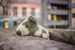 Viaje del juguete del perrito Imágenes de archivo libres de regalías