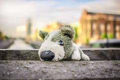 Viaje del juguete del perrito Fotos de archivo libres de regalías