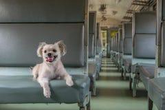 Viaje del perro en tren Imagenes de archivo