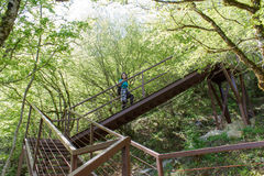 Viaje del viajero en el camino artificial en el bosque de la reserva de las montañas Forma de vida activa y sana el vacaciones de Fotografía de archivo