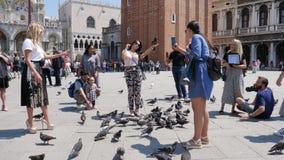 Viaje en Europa, fotografían a los turistas felices con los pájaros en los teléfonos móviles y las cámaras en las marcas del St a almacen de video