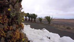 Viaje en Lanzarote almacen de video