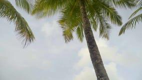 Viaje exótico, palmeras tropicales altas en orilla de mar con agua caliente almacen de video