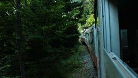 Viaje na floresta na estrada de ferro do estreito-calibre, vista da janela aberta do carro no verão filme