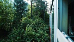 Viaje na floresta na estrada de ferro do estreito-calibre, vista da janela aberta do carro no verão, movimento lento video estoque