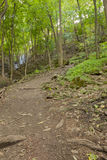 Viaje nas madeiras Imagem de Stock