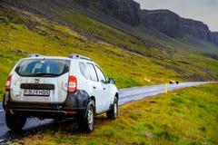 Viaje por carretera roadtripIcelandic islandés con fango y ovejas con MU fotografía de archivo