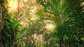 Viaje a través de rocas de la selva en el resplandor de Sun almacen de metraje de vídeo