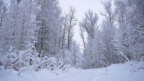 Viaje a través del bosque fabuloso del invierno del bosque nevoso almacen de video
