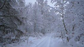 Viaje a través del bosque fabuloso del invierno del bosque nevoso almacen de metraje de vídeo