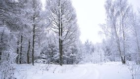Viaje a través del bosque nevoso metrajes
