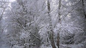 Viaje a través del bosque nevoso almacen de video