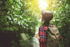 Viajero asiático de la muchacha que camina en el bosque Foto de archivo