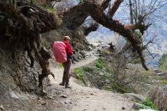 Viajero de la mujer joven de la foto con la mochila roja que camina en paisaje hermoso del verano de las montañas en fondo horizo Foto de archivo