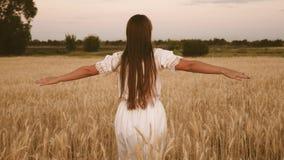 Viajes de la muchacha en el campo Concepto de turismo ecol?gico la muchacha feliz camina a través de un campo del trigo amarillo  almacen de video